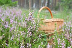 In the forest, the mushroom set the basket in the top of the flowers. Heater Stock Photos
