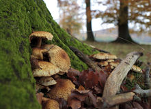 Forest mushrooms. On a mossy green tree stump Stock Photography