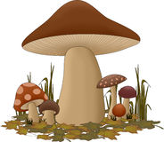 Forest mushrooms. An illustration featuring a setup of forest mushrooms Stock Photography