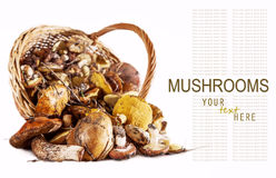 Forest Mushrooms Background Stock Images