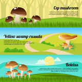 Forest Mushrooms Banners Set Fotografia Stock