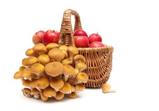 Forest mushrooms and a basket of apples isolated on white backgr Royalty Free Stock Image