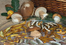 Forest mushrooms Royalty Free Stock Photos