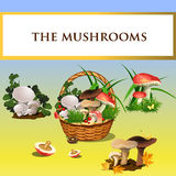 Forest mushrooms and basket with mushrooms Stock Images