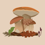 Forest mushrooms-cepe Stock Images