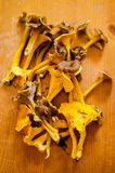 Forest mushrooms- chanterelles Royalty Free Stock Photo