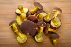 Forest mushrooms on the cutting board. Boletus badius mushrooms on the cutting board Royalty Free Stock Photography
