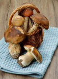 Forest Mushrooms Stock Photography