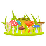 Forest mushrooms on grass lawn vector illustration. Stock Photos