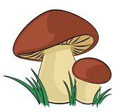 The Forest mushrooms. The Forest mushrooms with a green grass Stock Images