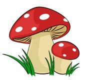 The Forest mushrooms. The Forest mushrooms with a green grass Stock Photography