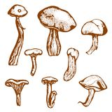 Forest mushrooms. Hand drawn. Vector illustration Royalty Free Stock Photo