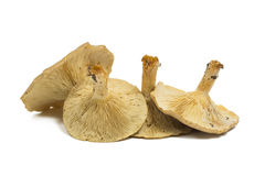 Forest Mushrooms Isolated On White Background.  Stock Photos