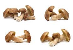 Forest mushrooms isolated on white background. Horizontal photo Royalty Free Stock Photography