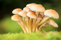 Forest mushrooms Stock Image