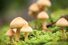Forest mushrooms Royalty Free Stock Image