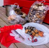 Mushrooms in packages on a wooden floor against a red wall Stock Photography