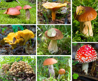 Forest mushrooms set Stock Photos