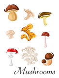 Forest mushrooms set in cartoon style Royalty Free Stock Photo
