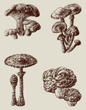 Forest mushrooms. Vector image of the forest mooshrooms Royalty Free Stock Photo