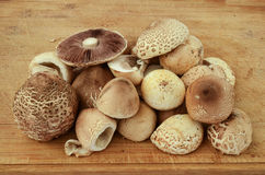 Forest mushrooms. Wild forest fungi - Parasol and Field mushrooms, prepared for kitchen on a wooden chopping board Stock Image