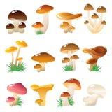 Forest Mushtooms Icon Set Fotografie Stock
