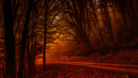 Forest mystery. A forest path during winter Stock Images