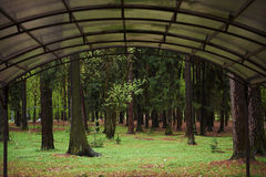 Forest mystic way, Primorye, Russia. A canopy made of polycarbonate Royalty Free Stock Photo