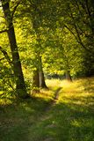 Forest narrow road between green trees in the warm golden sunshine. Summer natural landscape Stock Photo