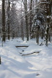 Forest narrow stream frozen Royalty Free Stock Images