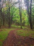 Forest in National Park Cerro Castillo. Austral highway, chile, XI region of Aysen.  stock image