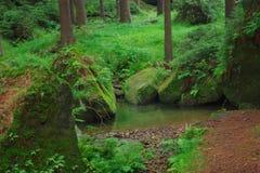 Forest. In National Park Czech Switzerland stock photos