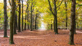 The forest of National park the Hoge Veluwe in the Netherlands Stock Photos