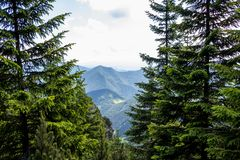 Mountain view with Pine forest, Northern Slovakia stock image