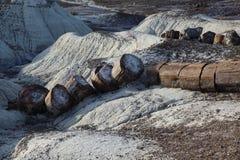 Forest National Park petrificato Fotografia Stock Libera da Diritti