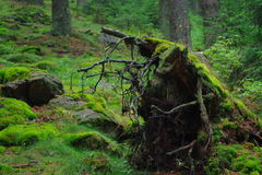 Forest in National park. Sumava, Czech Republik, Europe royalty free stock photos