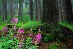 Forest in National park. Sumava, Czech Republik, Europe stock image