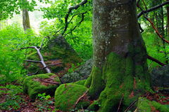 Forest in National park. Sumava, Czech Republik, Europe royalty free stock photography