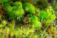 Forest in National park. Sumava, Czech Republik, Europe royalty free stock images