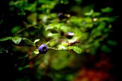 Forest in National park. Sumava, Czech Republik, Europe Stock Photos