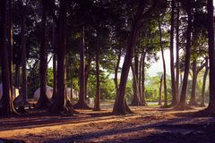 Forest with natural light and huts royalty free stock image