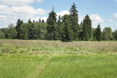 Forest in the Natural Preserve Kladska peats Royalty Free Stock Photo