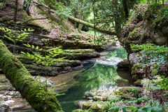 Forest with natural water Royalty Free Stock Photo