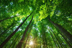 Into the forest. Royalty Free Stock Photos