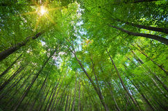 Into the forest. Royalty Free Stock Image
