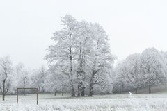 Forest nature covered with snow Stock Photography