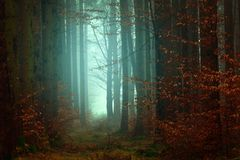 Forest, Nature, Ecosystem, Woodland Stock Photos
