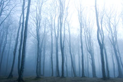 Forest. Royalty Free Stock Photo