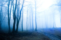 Forest and nature. Royalty Free Stock Photo