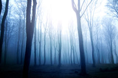 Forest. Stock Photography